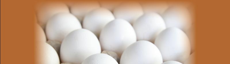 egg-industry-12