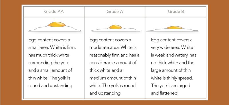 egg-chart
