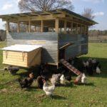 pasture-eggs